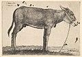 Donkey MET DP823966.jpg