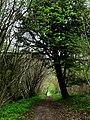 Downland path - geograph.org.uk - 1284504.jpg