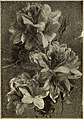 Dreer's wholesale price list of seeds plants and bulbs for florists - fertilizers, insecticides, tools and sundries (1912) (21032764746).jpg