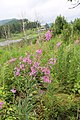 Driving from Aershan back to Tieling 2015 03.jpg