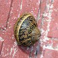 Durango - mollusc.jpg