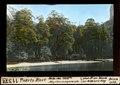 ETH-BIB-Puerto Blest , Stelle des 1898er Myrtencampaments-Dia 247-11373.tif