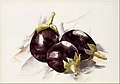 Eggplants MET DT10780.jpg