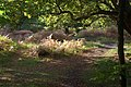 Epping Forest - geograph.org.uk - 2118129.jpg