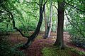 Epping Forest High Beach Essex England - spring trees and moss mounds.jpg