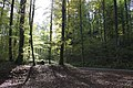 Eschenberg - panoramio (12).jpg