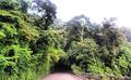 Estrada das Paineiras - Floresta da Tijuca -RJ-Br.png