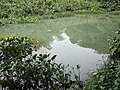 Estuary - Brackish water - river in guadeloupe.jpg
