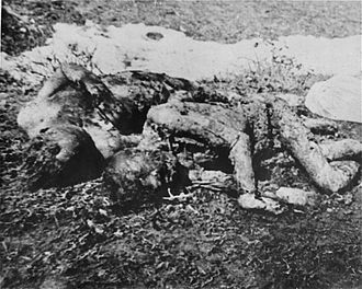 Jasenovac concentration camp - The bodies of prisoners executed by the Ustaše in Jasenovac