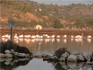 Bages, Aude - Flamingos at Bages