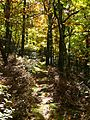 Fall-trail - West Virginia - ForestWander.jpg