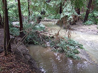 Adobe Creek (Santa Clara County, California) - Fallen redwood in Adobe Creek. This large woody debris prevents erosion by slowing high flows and provides shelter for trout and other species