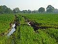 Farmland, Ruscombe - geograph.org.uk - 799217.jpg