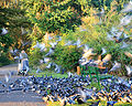 Feeding pigeons 1.jpg