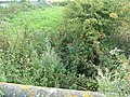 Field Drain, Carr Lane - geograph.org.uk - 1467932.jpg