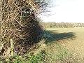 Field boundary - geograph.org.uk - 1115982.jpg