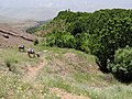 Fields and Cherry Groves - Gazor Khan - Northwestern Iran (7414153058).jpg