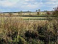 Fields near Little Bavington - geograph.org.uk - 271430.jpg
