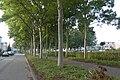 Fietspad Heksenwielpad P1100940.jpg