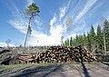 Finland - panoramio (13).jpg