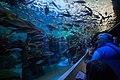 Fish Tube Tank (20113728413).jpg