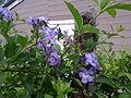 Flor de los Jardines del Este.jpg