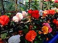 Flower-center141457.jpg