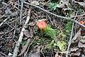 Flowerpot Island, Ontario - Laslovarga (25).jpg