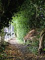 Footpath from Bridgewater Road to Berkhamsted Common - geograph.org.uk - 1450402.jpg