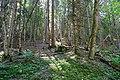 Forêt @ Le Grand-Bornand (50960584936).jpg
