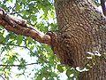 Forêt de la Coubre 040.jpg