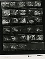 Ford B0591 NLGRF photo contact sheet (1976-07-07)(Gerald Ford Library).jpg