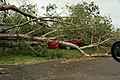 Ford Falcon ute crushed by a downed tree in Townsville.jpg