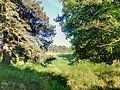 Forest - panoramio (54).jpg