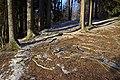 Forest - panoramio (63).jpg