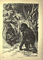 Forest and jungle, or, Thrilling adventures in all quarters of the globe (Page 232) (6220543229).jpg
