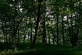 Forest in Mezmai, Russia, June, 2018-3.jpg