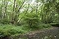 Forest in Mt.Gozen (Ibaraki) 04.jpg
