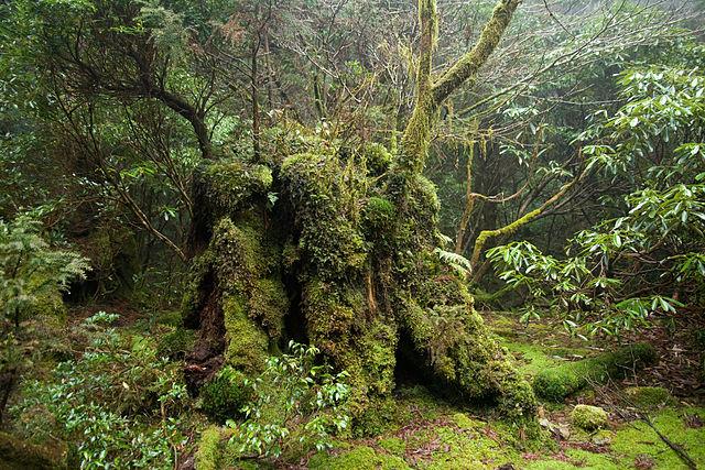 Podrast v lese - tieňomilné rastliny
