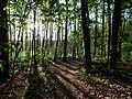 Forest next to the Teufelsbruch swamp.jpg