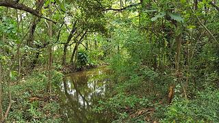 KwaZulu-Cape coastal forest mosaic Subtropical moist broadleaf forest ecoregion of South Africa