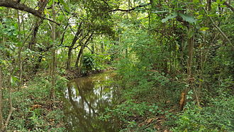 Subtropical forest near Durban Forest outside of Durban.jpg