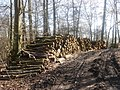 Forestry work at Cuerden Hall - geograph.org.uk - 140700.jpg
