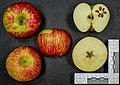 Freiherr von Hallberg (apple) jm122107.jpg