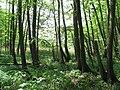 Fresdorf Z1 Bruchwald See.JPG
