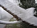Frost on a twig - geograph.org.uk - 298649.jpg
