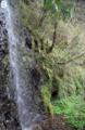 Fukuia multistriata and Blanfordia simplex habitat.png
