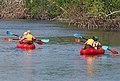 Fun in the Everglades, Florida (39778943854).jpg