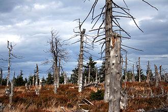 Owl Mountains - Dead forest on Wielka Sowa