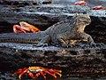 Galápagos Inseln, Ecuador (13922088754).jpg